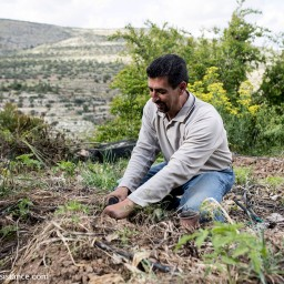 Podcast: Saad Dagher- the rise of agro-ecology in Palestine